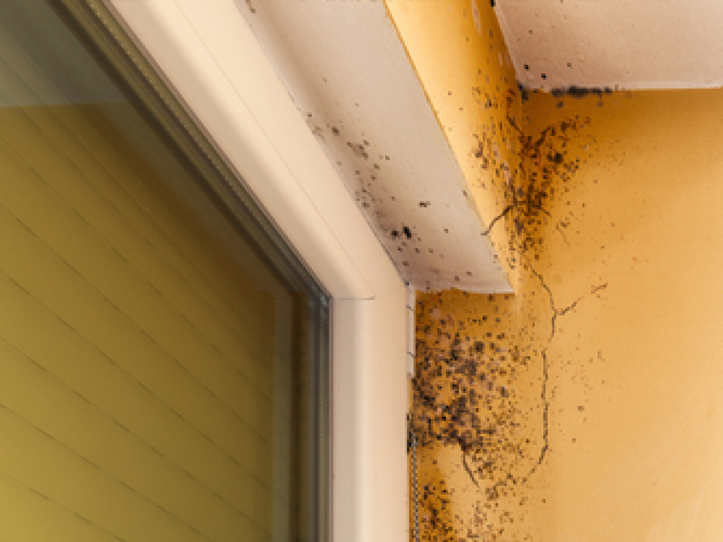 What are the symptoms of chronic mold exposure